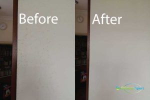 Before And After Mold Cleaning Service