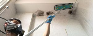 Mold Cleaning Services Singapore